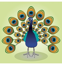 Peacock vector