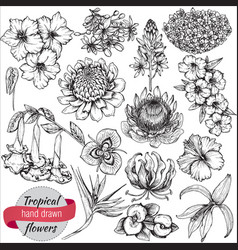 Collection of hand drawn tropical flowers vector