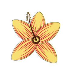 tropical hibiscus flower natural petal flora vector image