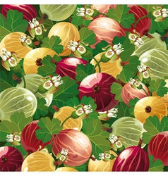 background of colorful gooseberry vector image