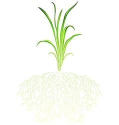 A green grass vector