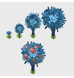 Growth stages of blue apple tree with red fruit vector