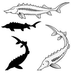 Set of sturgeon vector image vector image