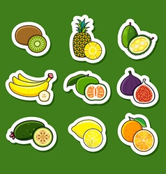 Set of citrus and tropical fruits vector