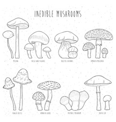 Set of inedible mushrooms with titles on white vector