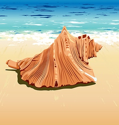 Shell at beach vector