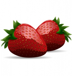 strawberries vector image vector image