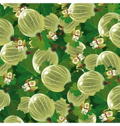 background of the green gooseberry vector image