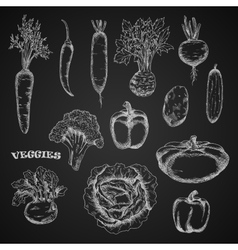 Sketched veggies in engraving style vector