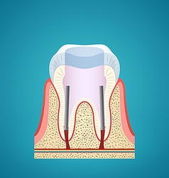 Healthy human tooth in cutaway vector