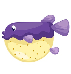 isolated blowfish vector image