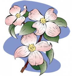 flowering dogwood vector image vector image