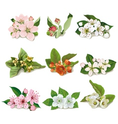 set of flowers on fruit trees vector image