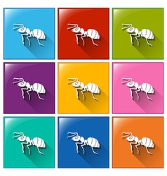 Buttons with ants vector