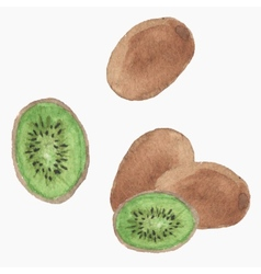 Hand-drawn kiwi real watercolor drawing vector