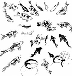 Koi illustrations vector