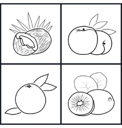 Peachkiwifruit coconutgrapefruit vector