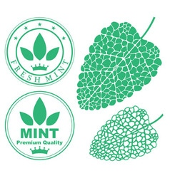 Mint vector