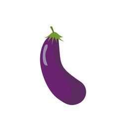 Eggplant isolated purple vegetables on white vector