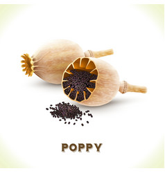 Poppy seed isolated on white vector image