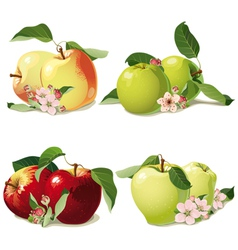 Set of ripe apples vector