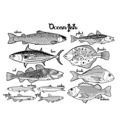 Graphic ocean fish collection vector