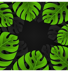 Monstera leaves background vector image