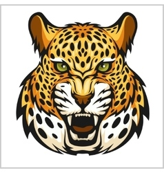 Jaguar portrait jaguars head on white vector