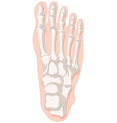 Bone x-ray for gout toe vector image