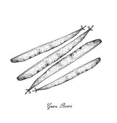 Hand drawn of delicious fresh green beans vector