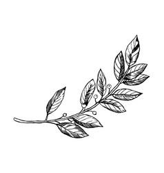 laurel branch engraving vector image