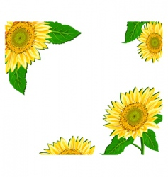 sunflower framework vector image vector image