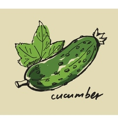 Hand drawn cucumber vector