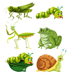 Different types of insects in green color vector