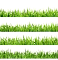 Fresh spring green grass isolated eps 10 vector