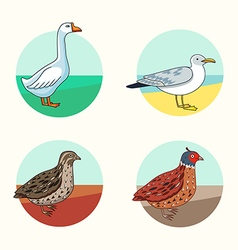 Birds set california quail goose herring gull cart vector