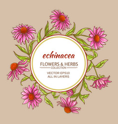 Echinacea frame vector