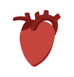 Heart organ healthy care medical sport vector