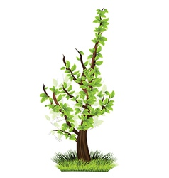 Small tree vector image