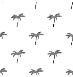 Mexican fan palm icon in black style isolated on vector