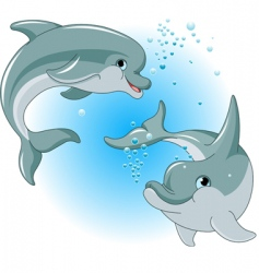 dolphins couple vector image