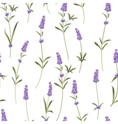 Seamless pattern of lavender vector image vector image