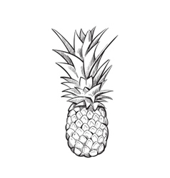 Hand drawn pineapple fruit vector image vector image