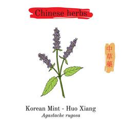 medicinal herbs of china korean mint vector image vector image