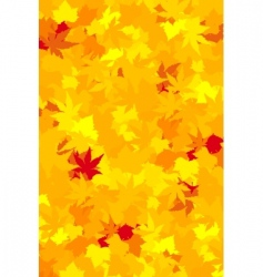 vibrantly colored fall leaves vector image