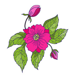 Hand drawing peony flowers vector