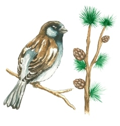 The sparrow on white background vector