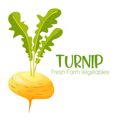 turnip isolated on white background vector image vector image