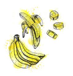 watercolor hand drawn set of banana sketch vector image vector image