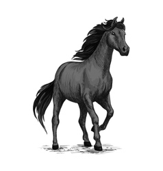 Gray horse with stomping hoof vector
